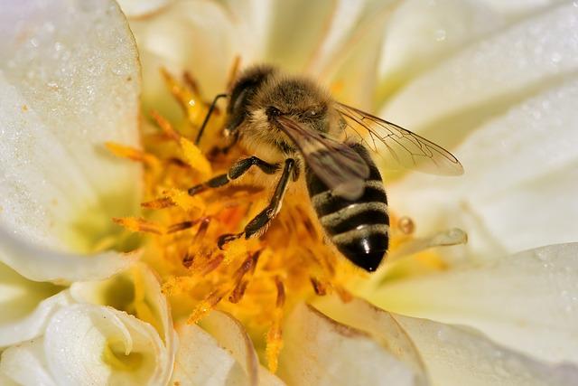 Schweizer Blütenhonig Honig Bienenhonig