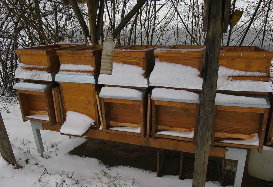 Was machen Bienen im Winter