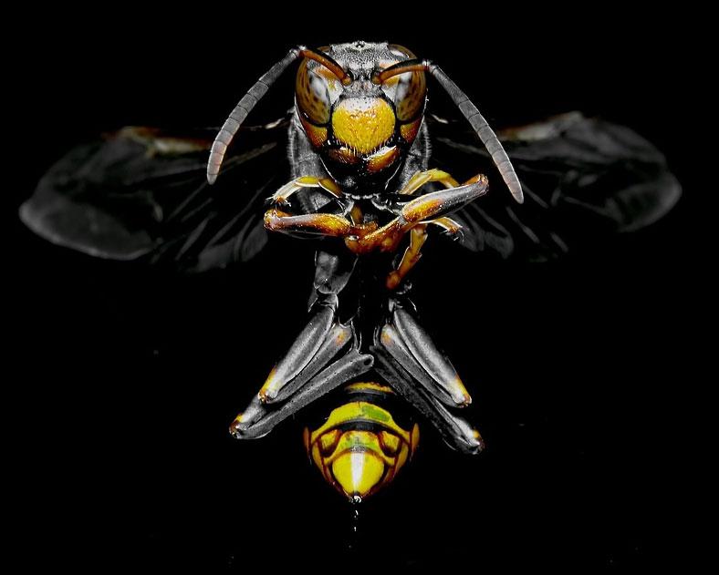 Bienenstich Wespenstich