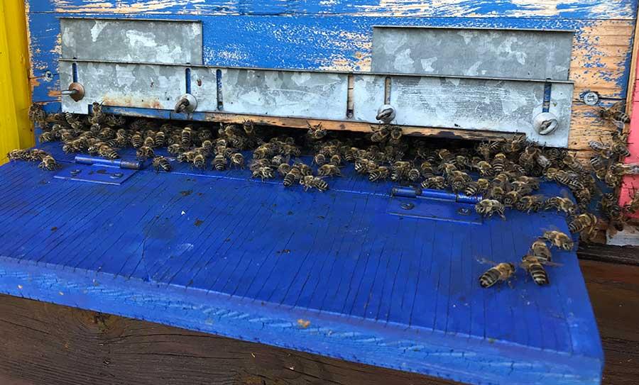 selber Bienen halten